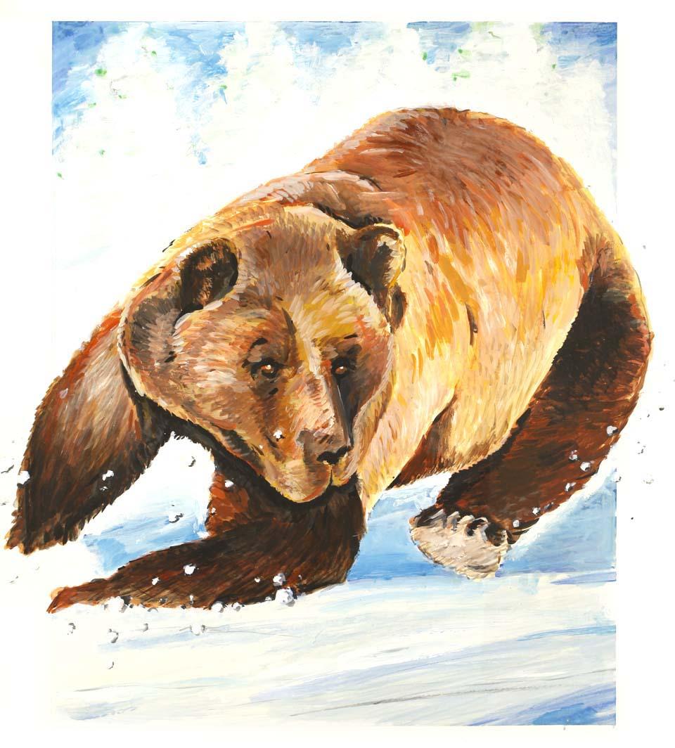 bear snow